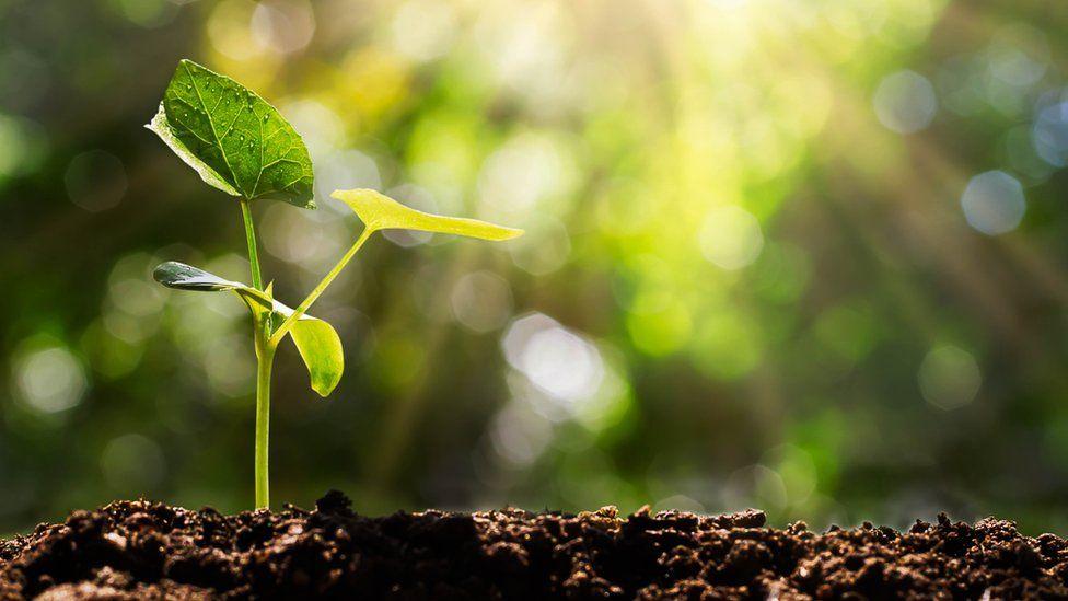 สิ่งที่ควรรู้ก่อนจะซื้อต้นไม้มาปลูกสักต้น